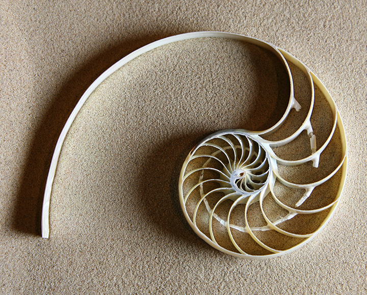 The Geometry Of Nature